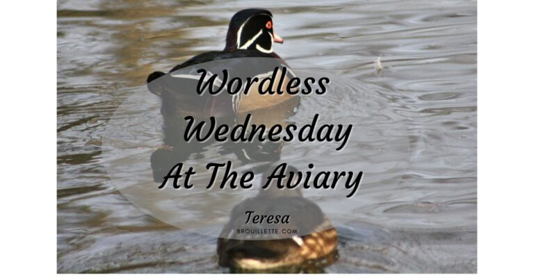 Wordless Wednesday At The Aviary