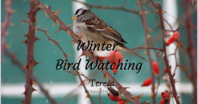 Winter Bird Watching
