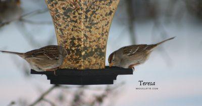 Winter Bird Watching